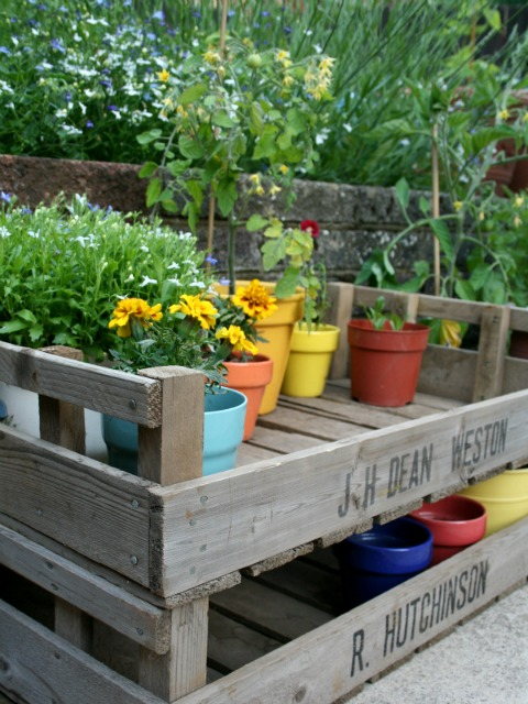Vintage apple crates used in the garden to display potted plants