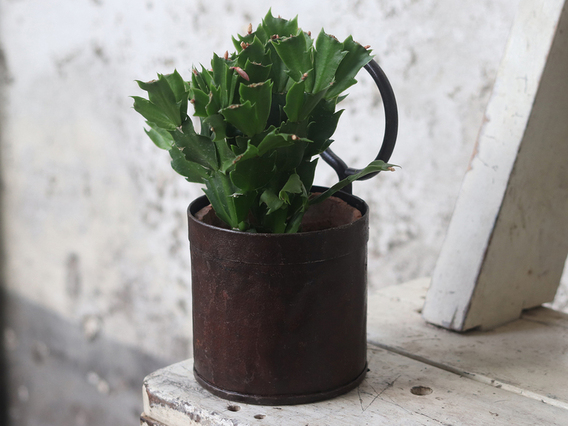 Metal Plant Pot - Single