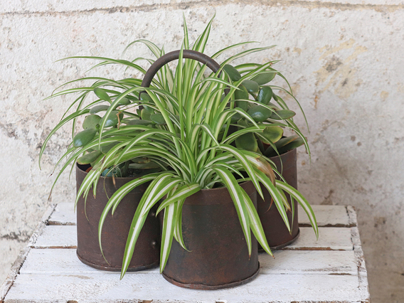 View our  Metal Storage Pot - Quadruple  from the  New In collection