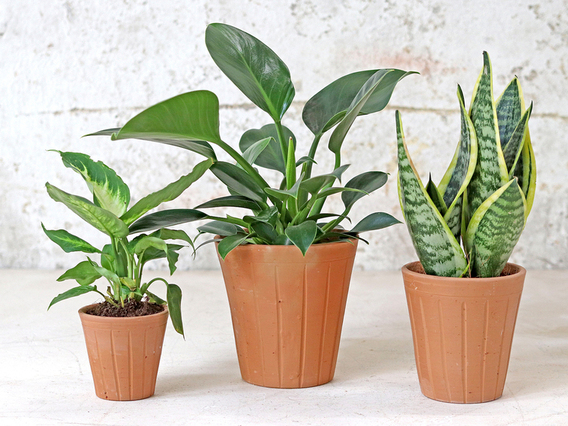 Fluted Terracotta Pot - Set Of 3