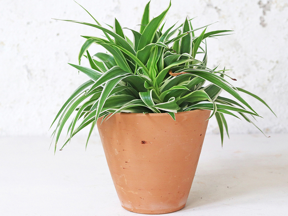 View our  Tapered Terracotta Plant Pot - Medium from the  Tableware collection