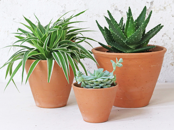 Terracotta Plant Pots Set Of 3 - Tapered