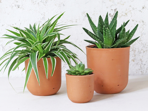 View our  Terracotta Plant Pots Set Of 3 - U curved from the   collection