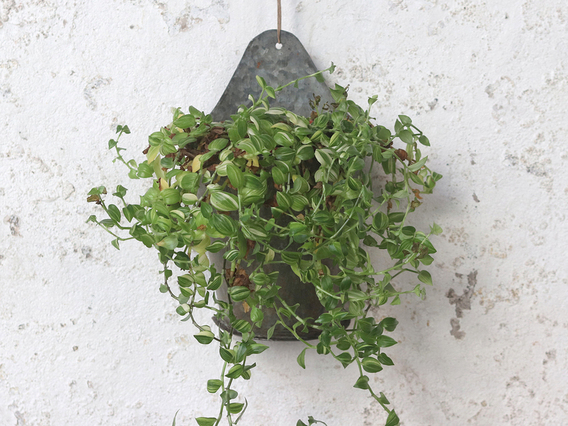 View our  Wall Hanging Planter - Small from the   collection