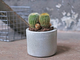 Cement Mini Planter Thumbnail