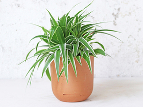 Curved Terracotta Plant Pot – Medium Thumbnail